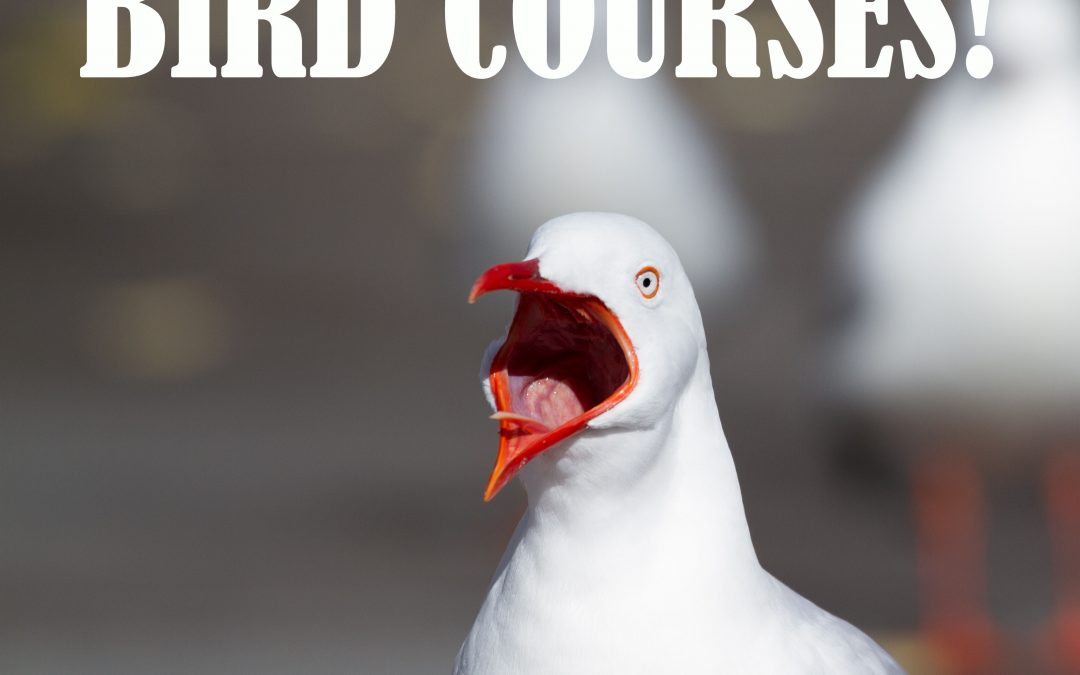 "Do ""bird courses"" really exist?"